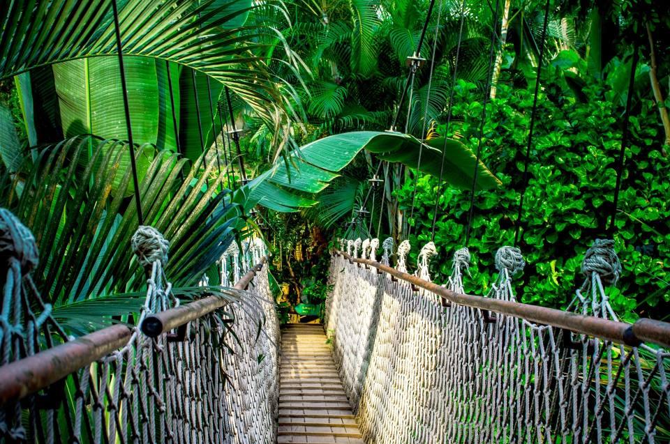 Heimat Amazonien