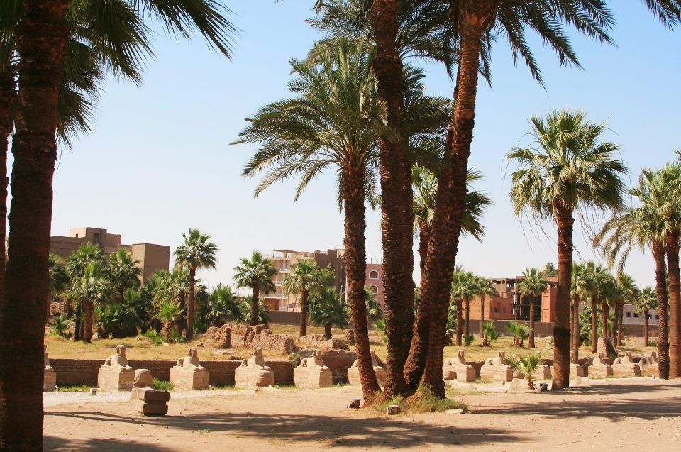 Palmen am Nilufer - Flora und Fauna am ägyptischen Nilufer