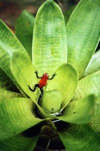 Frosch © Konrad Wothe