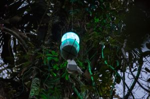 Leuchtfalle © Konrad Wothe
