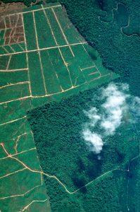 Palmölplantage © Konrad Wothe