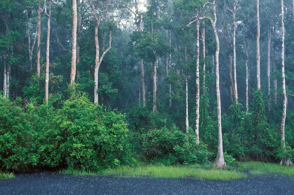 Wasserkreislauf - Regenwald - Regen im Regenwald © Konrad Wothe