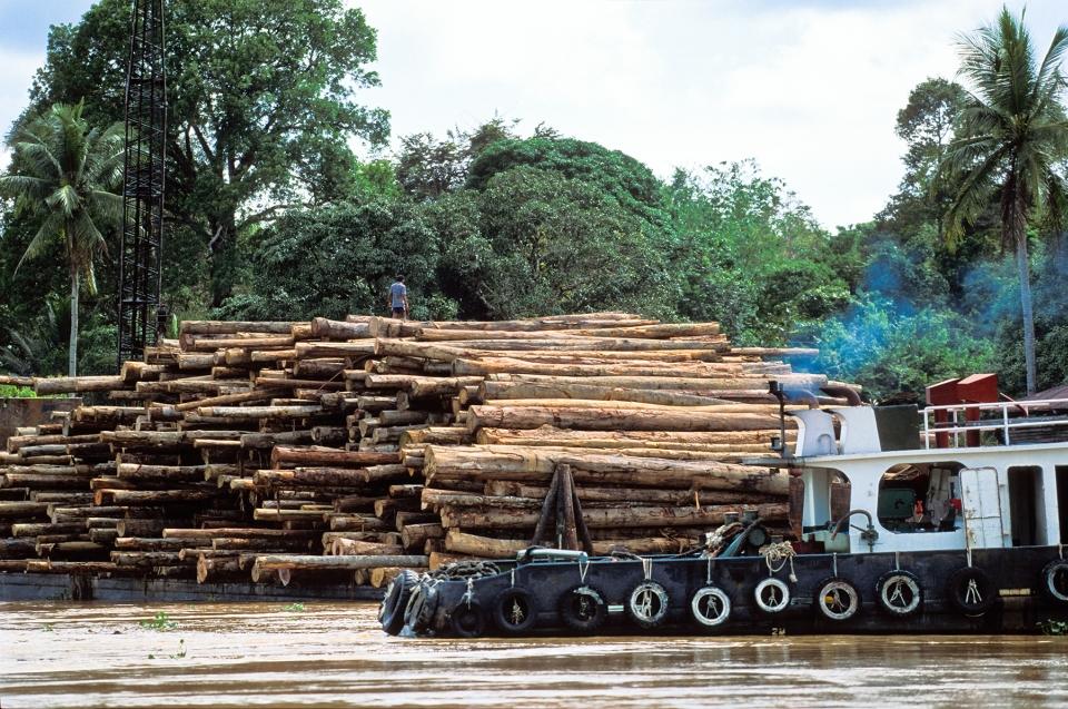 Bedrohung für den Regenwald - Regenwaldzerstörung © Konrad Wothe