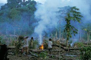 Rohdung im Regenwald © Konrad Wothe