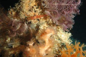 Kaltwasserkoralle © MARUM - Zentrum für Marine Umweltwissen, Universität Bremen