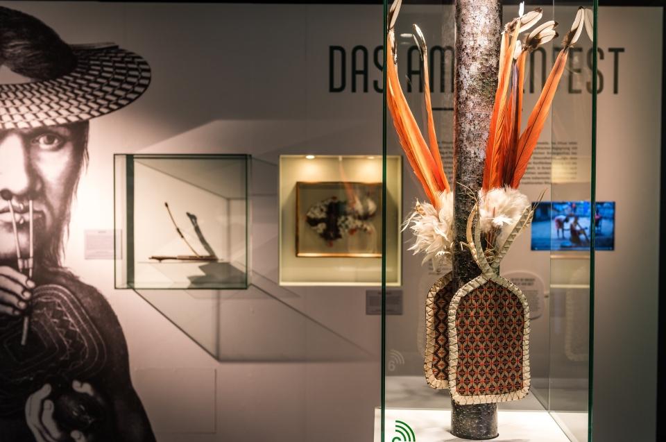 Ameisenhandschuh Regenwald Ausstellung - Copyright: Andreas Jacob