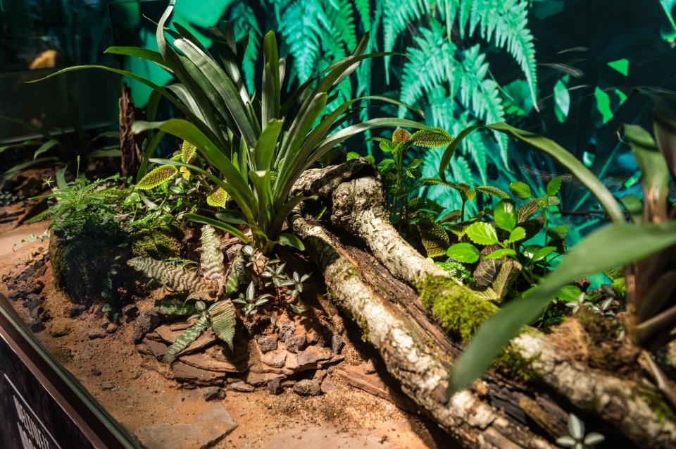 Ameisenterrarium Regenwald Ausstellung - Copyright: Andreas Jacob