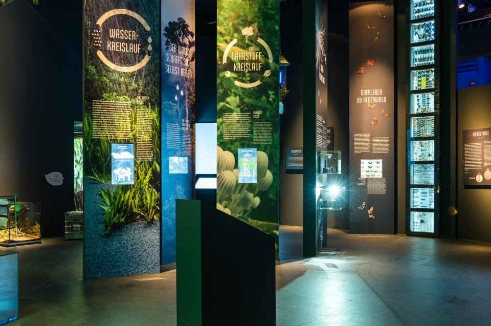 Bereich Nährstoff- und Wasserkreislauf Regenwald Ausstellung - Copyright: Andreas Jacob