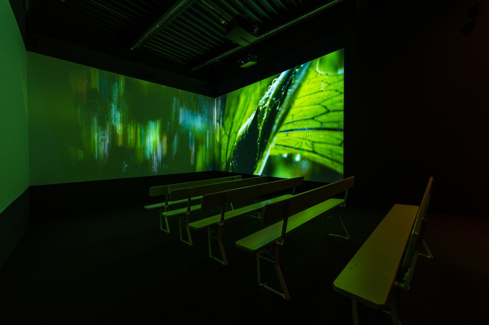 Regenwald Kino Regenwald Ausstellung - Copyright: Andreas Jacob