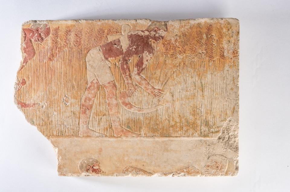 Relief mit Getreide Ernte, Kalkstein, Altes Reich © King`s Museum, University of Aberdeen, ABDUA: 21630, Foto: Andreas Jacob